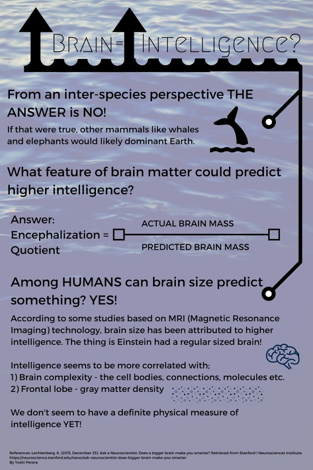correlation between brain and intelligence